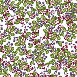 Seamless pattern. blue and red Berry  plants. Wallpaper. On white background Royalty Free Stock Photo