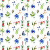 Seamless pattern with blue Sweet pea, Lathyrus odoratus, leaves. Royalty Free Stock Photos