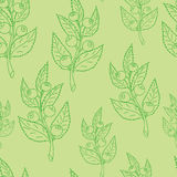 Seamless pattern of  blueberry. In green colors Royalty Free Stock Photos
