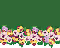 Seamless pattern border with multicolor flowers Royalty Free Stock Images