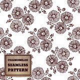 Seamless pattern with bouquet of chamomiles Stock Photography