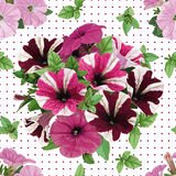 Seamless pattern, bouquet of petunias Stock Photography
