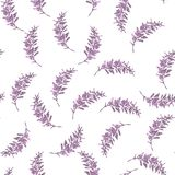 Seamless pattern with branch with leaves isolated on white background. Royalty Free Stock Photography