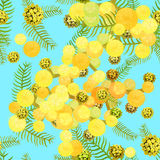 Seamless pattern Branch of mimosa acacia silvery whitened  Vecto Royalty Free Stock Photo