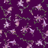 Seamless pattern with branch of purple hosta flower. Lilies. Hosta ventricosa minor, asparagaceae family. Royalty Free Stock Images