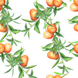Seamless-pattern-branch-with-tangerines Stock Photos