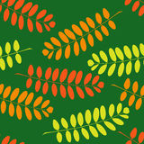 Seamless pattern with branches of acacia Stock Images