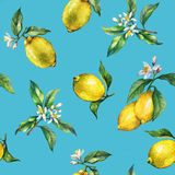 The seamless pattern of the branches of fresh citrus fruit lemons with green leaves and flowers. Royalty Free Stock Images