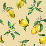 The seamless pattern of the branches of fresh citrus fruit lemons with green leaves and flowers Royalty Free Stock Photos