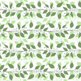 Seamless pattern branches and leaves of Camphor laurel. Floral background. Vector Stock Image
