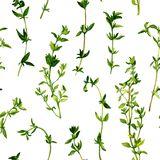 Seamless pattern with branches of thyme Stock Photography