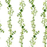 Seamless pattern with branches of thyme Stock Photo