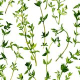 Seamless pattern with branches of thyme Stock Photos