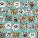 Seamless pattern.  Breeds. Siamese, British, Siberian, Persian, Scottish Fold, Maine Coon, Bengal, Sphynx. Set of cats in doodle hipster vintage style Stock Photography