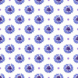 Seamless pattern with bright cornflowers and dots on white background. Seamless pattern with bright cornflowers and dots on white background stock photography