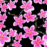 Seamless pattern with bright pink flowers. Floral décor of plumeria branch. vector illustration