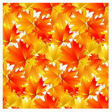 Seamless pattern bright yellow autumn maple leaves Stock Photography