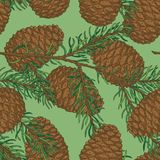 Seamless Pattern with Pine Cone and Fir Branch. Seamless Pattern with Brown Pine Cone and Fir Branch on a Green Background Royalty Free Stock Photos