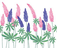 Seamless pattern brush with lupinus. Endless horizontal texture. Royalty Free Stock Images