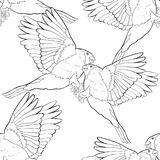 Seamless pattern bullfinch bird coloring winter red belly vector Stock Images