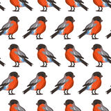 Seamless pattern with bullfinches Stock Photo