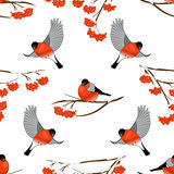 Seamless pattern with bullfinches and branch of rowan, vector illustration. Vector illustration Seamless background with bullfinches and branch of rowan Vector Illustration