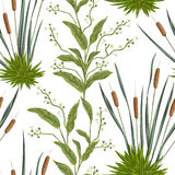 Seamless pattern with bulrush and swamp plants. Royalty Free Stock Image
