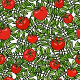 Seamless Pattern of Bunch Cherry Tomatoes on a Branch With Leaves. Botanical Gardening Illustration. Ketchup Logo or Vegetable Sal. Ad. Realistic Hand Drawn royalty free illustration