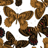 Seamless pattern with butterflies. Royalty Free Stock Images