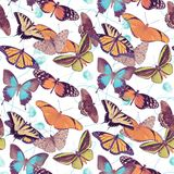 Seamless pattern with  butterflies. On white background Stock Image