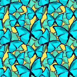 Seamless pattern the butterfly blue morpho monarch vector illust Stock Photo