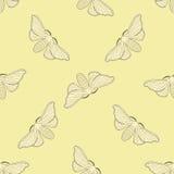 Seamless pattern with butterfly Bombyx mori.    hand-drawn butterfly Bombyx mori . Royalty Free Stock Photo