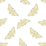 Seamless pattern with butterfly Bombyx mori.    hand-drawn butterfly Bombyx mori . Vector Royalty Free Stock Image