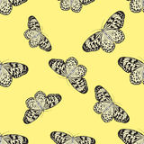 Seamless pattern with butterfly Idea Leuconoe. Paper Kite .   Royalty Free Stock Photos
