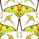 Seamless pattern Butterfly Madagascar comet moth moon  vector il Royalty Free Stock Photo