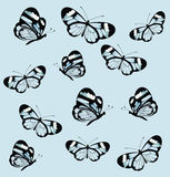 Seamless pattern with butterfly with transparent wings. Stock Photos