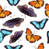 Seamless pattern of butterfly stock illustration