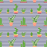 Seamless pattern of cacti and succulents in pots. Flat design cactus isolated on striped background. Vector illustration Royalty Free Stock Image