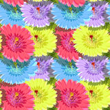 Seamless pattern of cactus flowers without gaps. vector  Royalty Free Stock Photos