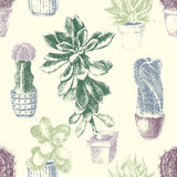 Seamless pattern with cactuses and succulents Royalty Free Stock Photos