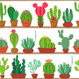 Seamless pattern of cactuses and succulents in pots on a shelves. Indoor plants on the shelves  on white Stock Image