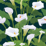 Seamless pattern of calla lily flowers with leaves on dark green background. Vector set of blooming flower for your design. Adornment for wedding invitations Stock Photography