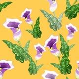 Seamless pattern calla Picasso a flower purple. Vector illustrat Stock Image