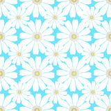 Seamless pattern with camomile on a blue background.  Stock Images