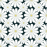 Seamless pattern with camomile on dark background.  Stock Photos