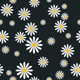 Seamless Pattern With Camomile Flowers On Black Background Template ute Floral Ornament. Vector Illustration Stock Photo