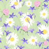 Seamless pattern with camomiles, clovers and bellflowers Stock Images