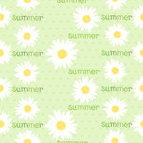 Seamless pattern with camomiles Stock Photo