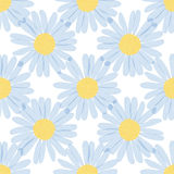 Seamless pattern - camomiles on white background Stock Photos