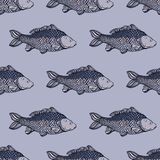 Seamless pattern with carp fish. Pond. Background with underwater inhabitants. Hand drawn. Vector illustration Royalty Free Stock Photos